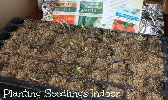 planting seedlings indoor