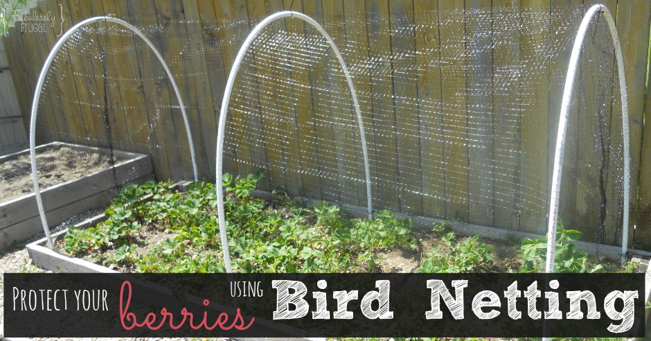 Keep The Birds Out And Your Berries In Bird Netting