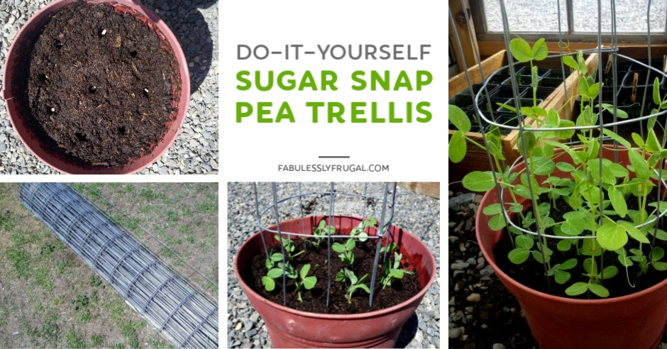 DIY sugar snap pea trellis